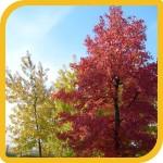 produzione_alberi_bosco