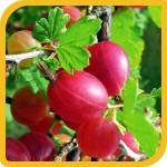 produzione_frutti_uva