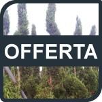 201311_cornice_offerta