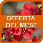 201402_cornice_offerta_mese