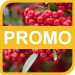 201402_cornice_promozione